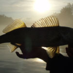Fish in sunlight
