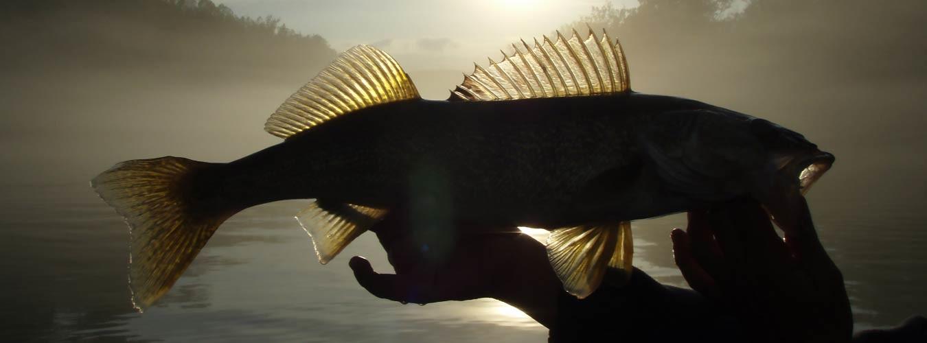 Sugar Ridge Resort Offers Beaver Lake Fishing Guides