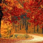 Forest Path-Sized for Blog Pic